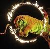 Цирки в Заводоуспенском